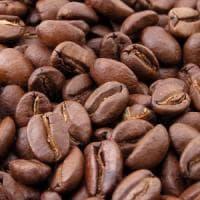 Le coltivazioni di caffé si dimezzeranno entro il 2050