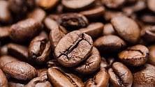 Le coltivazioni mondiali di caffé si dimezzeranno entro il 2050