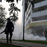 Zika, noto vermicida intestinale blocca la diffusione del virus