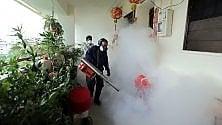 Zika, comune vermicida usato contro la tenia riesce a bloccare il virus