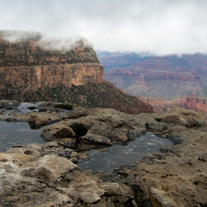 Usa il ritorno dei bisonti occupano in massa il grand for Grand canyon north rim mappa della cabina