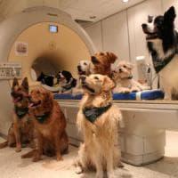 Così i cani riconoscono le nostre parole e il tono della voce