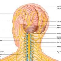 Niente più pillole: per guarire si hackera il sistema nervoso