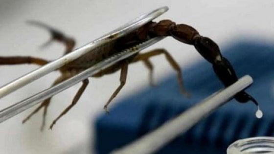 Cure alternative, urina e veleno di scorpione: così gli ultimi stregoni reclutano pazienti sul web