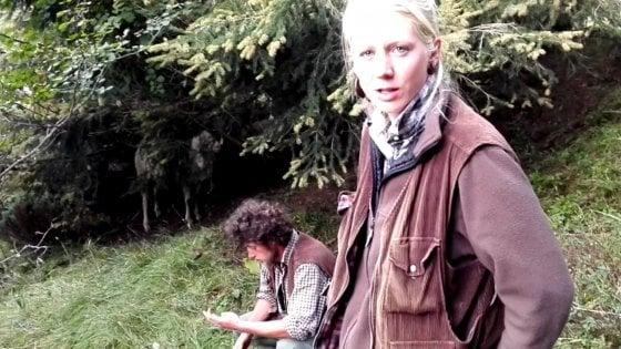 Il lupo è tornato anche sulle Dolomiti, e i pastori riscoprono antiche paure