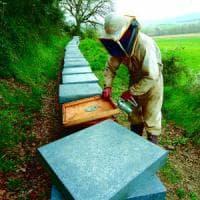 La crisi del miele italiano: 2016, anno nero per le api