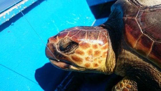 Isole eolie sos tartarughe un pronto soccorso per for Luce per tartarughe