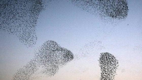 """Il volo degli uccelli """"virtuali"""" ispira i futuri aerei senza motore"""