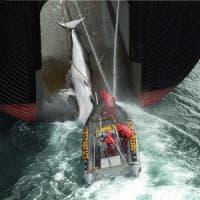 Greenpeace compie 45 anni, in prima fila per la tutela dell'ambiente