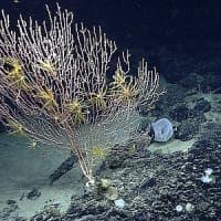 Usa, Obama crea una riserva naturale marina nell'Atlantico