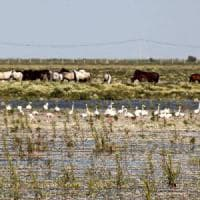 Spagna, siccità e inquinamento: a rischio il parco nazionale di Doñana