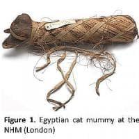E il gatto incontrò l'uomo. Storia di un rapporto speciale che si è sviluppato per terra...