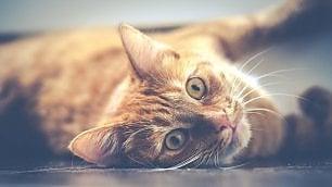 E il gatto incontrò l'uomo. Storia di un rapporto speciale che si è sviluppato per terra e per mare