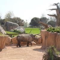 Rinoceronti, il triste record di esemplari uccisi