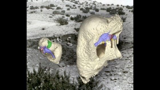 """Trovati gli """"antenati"""" dei dinosauri, vissero 100 milioni di anni prima"""