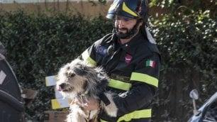 Crolla palazzo, cane intrappolato I vigili del fuoco salvano Billo