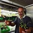 """Firenze, studio scientifico:  """"Le piante ci vedono,  hanno 'sensori' sulle foglie"""""""