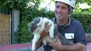 Sotto le macerie per 32 giorni spaurito ma salvo il gatto Rocco