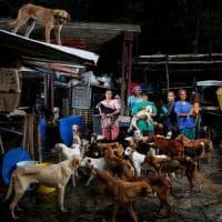 Venezuela, la crisi economica negli occhi dei cani abbandonati