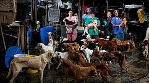 La crisi economica del Venezuela negli occhi dei cani abbandonati