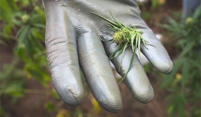 Esclusivo: qui cresce l'erba dei clan