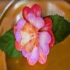 Sbocciano fiori artificiali