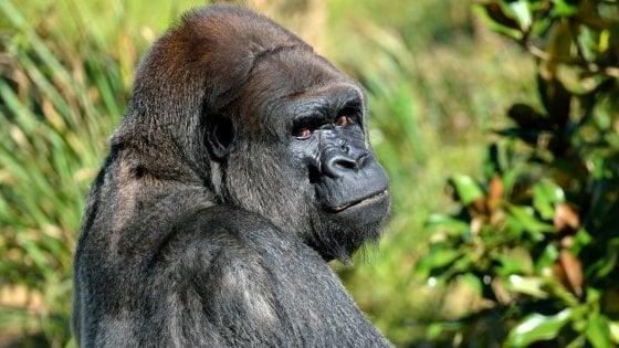 Uomini e primati: violenti per natura fin dalla preistoria