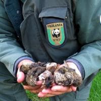Otto milioni di uccelli all'anno vittime del bracconaggio in Italia