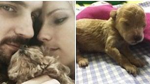 Michelle Hunziker allatta Leone il primo 'maschietto' di casa