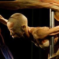 Milano, apre 'Real Bodies': il corpo umano in mostra con i suoi organi e