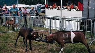 Il senso perduto della battaglia fra le capre