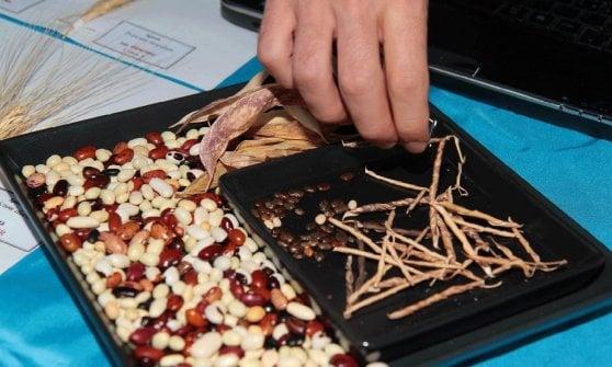 Fagioli, ceci e lenticchie per salvare il clima