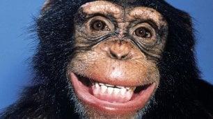 Anche le scimmie ''leggono il pensiero'': così prevedono le reazioni degli altri