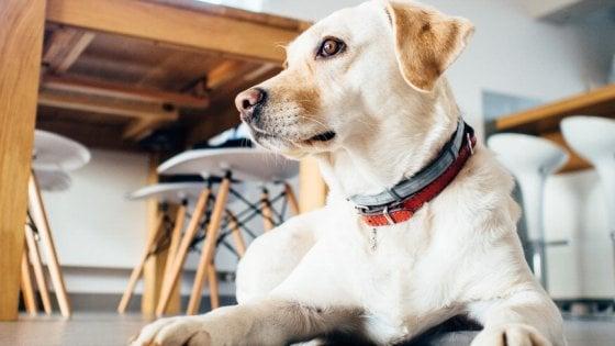 Il tuo cane ignora un comando? Forse pensa non sia una buona idea