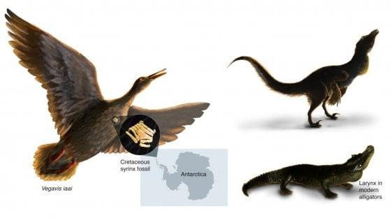 Prima il volo, poi il canto: così gli uccelli nella preistoria