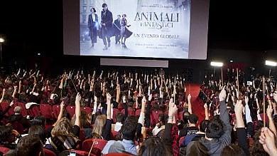 'Animali fantastici', sorpresa J. K. Rowling: La nuova saga sarà di cinque film