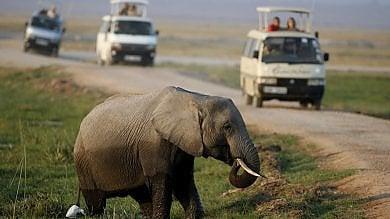 Allarme bracconaggio: Elefanti e pappagalli, ecco le specie più a rischio''
