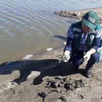 Perù, 10mila rane morte nel fiume. Gli ambientalisti: ''Colpa dell'inquinamento''