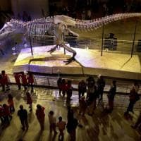 "Lisa Randall: ""Così la materia oscura cancellò i dinosauri"""