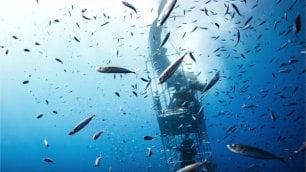 A un centimetro dallo squalo ancora una gabbia sfondata