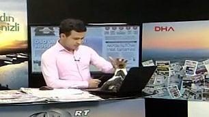 Diretta tv, il disturbatore felino Gatto irrompe in studio durante tg