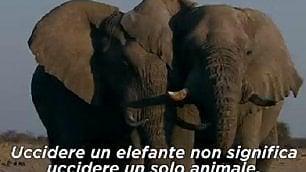 ''Caccia all'avorio'' il docu-film DiCaprio contro il bracconaggio
