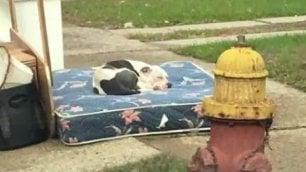 Abbandonato dopo il trasloco Il cane non lascia il materasso