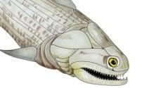 Mandibola di 400 milioni di anni rivela perché  si cambiano i denti