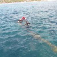 """""""Fermiamo il ghost fishing: quelle reti uccidono 100 mila mammiferi marini"""""""