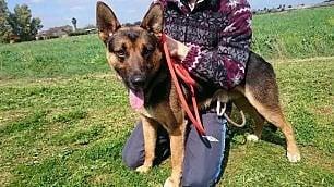 Ziggy, il cane morto di eroina nei giardini di piazza Vittorio