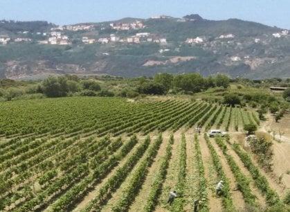 Calabria: parte dai giovani la riscossa di Cirò