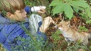 Il bambino e la volpe Un'amicizia da favola
