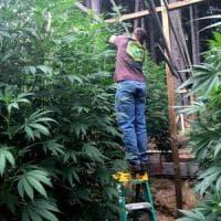 Legalizzazione della cannabis, obiettivo quasi raggiunto: verso le 50mila firme