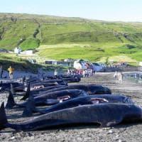 Niente da fare: nuovo no a un Santuario delle balene nell'Atlantico